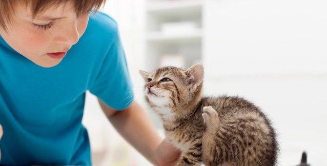 猫を撫でると『足も一緒に動く』4つの理由
