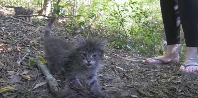 森に捨てられた子猫たち……偶然見つけたカップルがとった行動が優しすぎる。(movie)