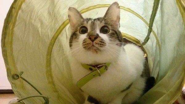 大人の猫が『子猫モード』になる瞬間5つ