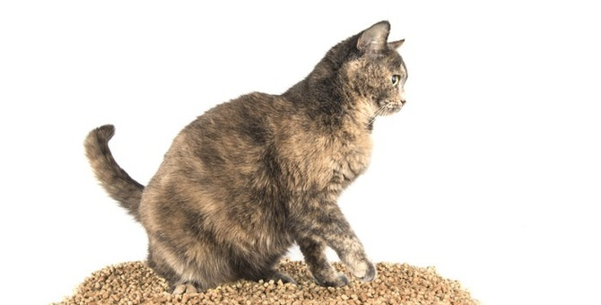 猫がトイレの猫砂を食べてしまう!その理由と対処法