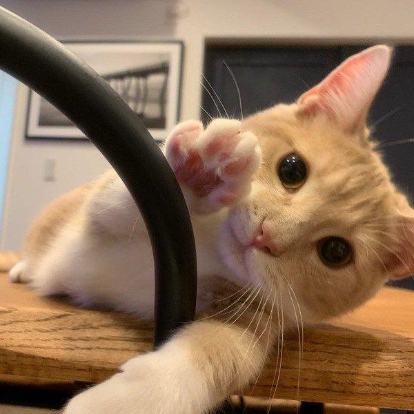 なぜ猫はよくツンデレと言われるのか?