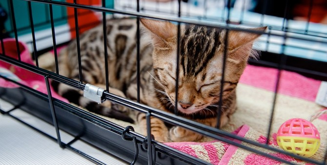 猫をケージに入れた方がいいタイミング3つ