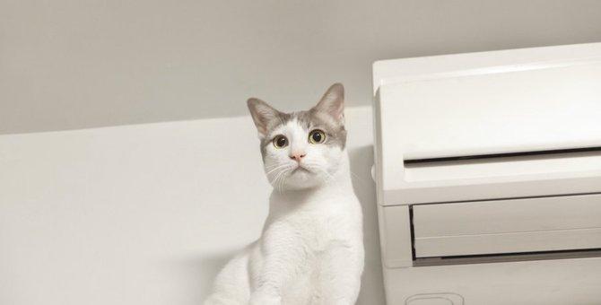 夏の猫のお留守番にエアコンは必須?快適な温度や気を付けること3つ