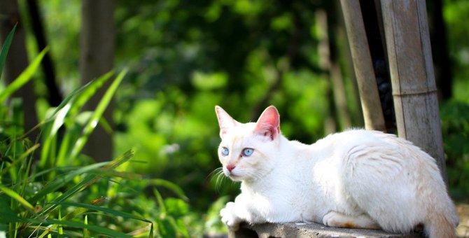 【信じるも信じないも…】猫の俗説3つ