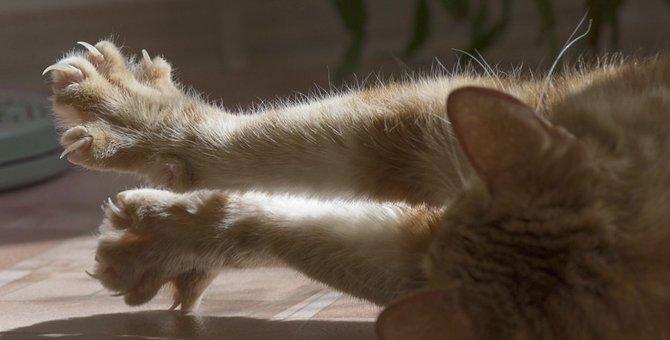 猫の引っかき傷の危険性と治す処置について