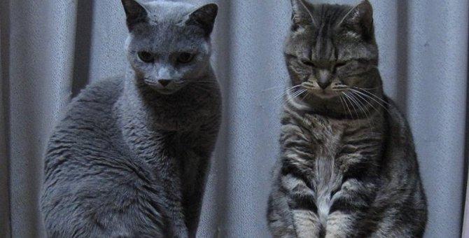先住ネコと新入りネコの関係性って?多頭飼いする時のポイント3つ