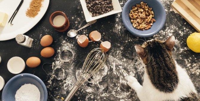 猫は小麦粉を食べても大丈夫?注意点や食べる以外の活用法