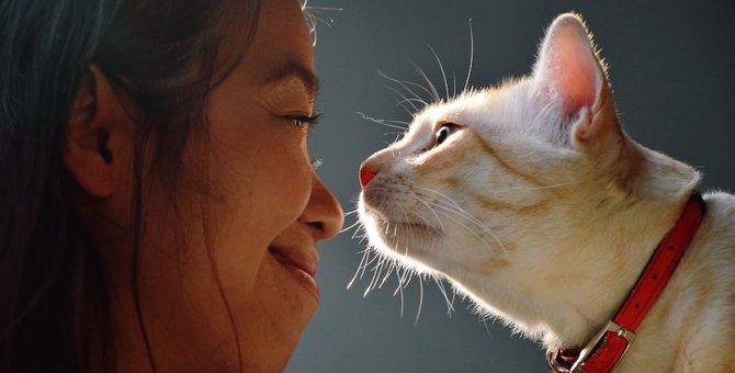 猫のあいさつの基本とお返しの仕方5つ