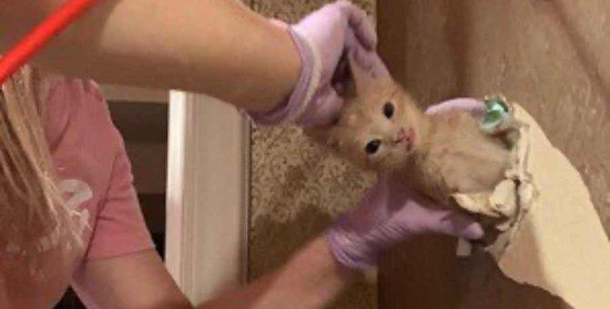 壁が、天井が、フルボッコ…猫一家の救出が大騒動に!