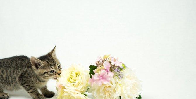 猫に香水が危険である理由と注意すべき点
