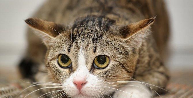 今すぐチェック!猫の『ストレススコア』7項目を確認しよう
