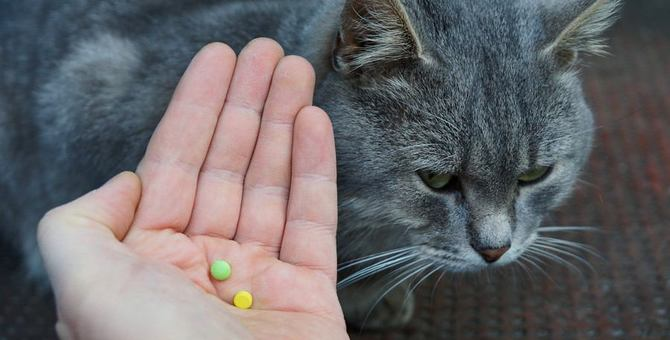 猫に上手に薬を飲んでもらうコツと種類別の方法