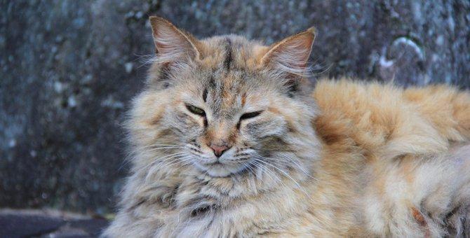 猫が毛割れする5つの原因と対策