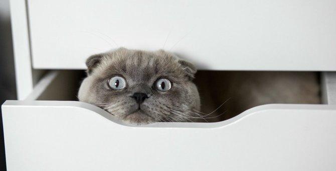 室内で猫に起こりがちな事故防止策3つ