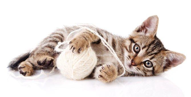 猫の毛玉ボールが可愛い!作り方とその遊び方
