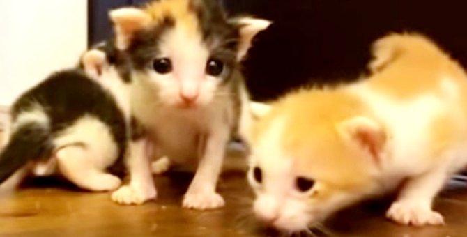 ヘソの尾がついたままの子猫たち…果たして生き残れるのか?Part2
