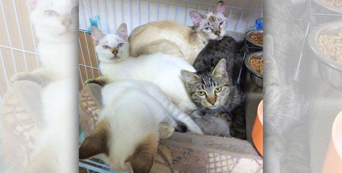 2キロにも満たない体で子育て…母猫は崩壊寸前の多頭飼育の中にいた