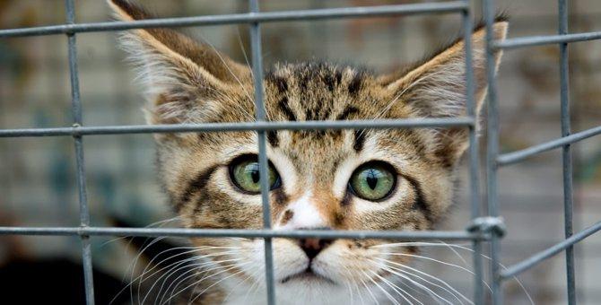 猫を捕獲する方法 準備や注意点について