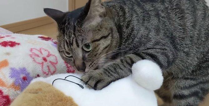猫ちゃん、またたびにべろんべろん♪