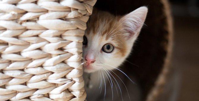 やられた!猫が飼い主にわざと粗相する理由3つ