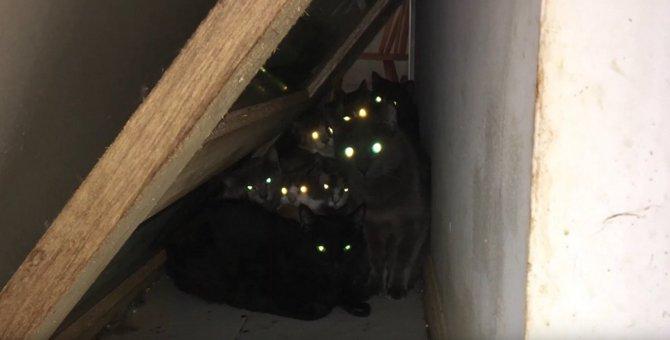 劣悪を超えている!悲惨な環境から77匹の猫をレスキュー