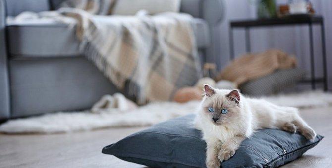 猫のお留守番「夏と冬」で違う5つの注意点