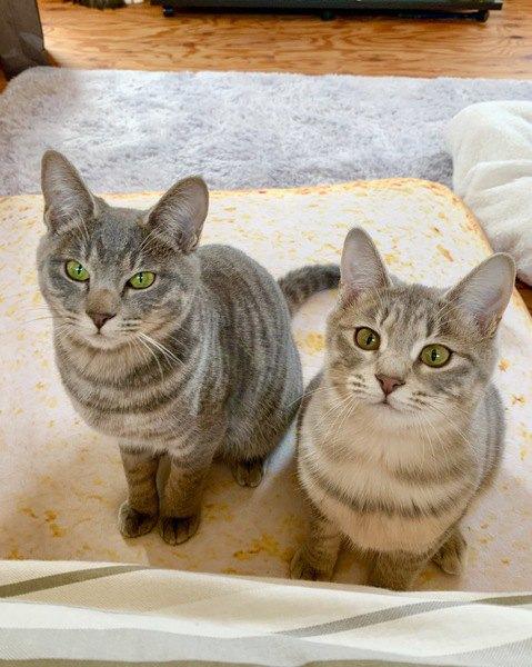 猫に好かれたい!選んでもらうためのコツ5つ