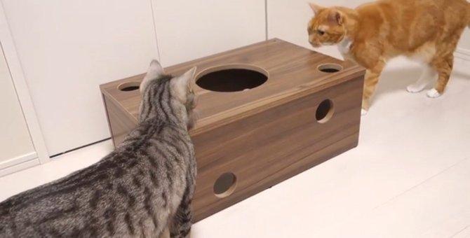 穴空きダンボールが好きな猫ちゃんが夢中になるおもちゃ♡