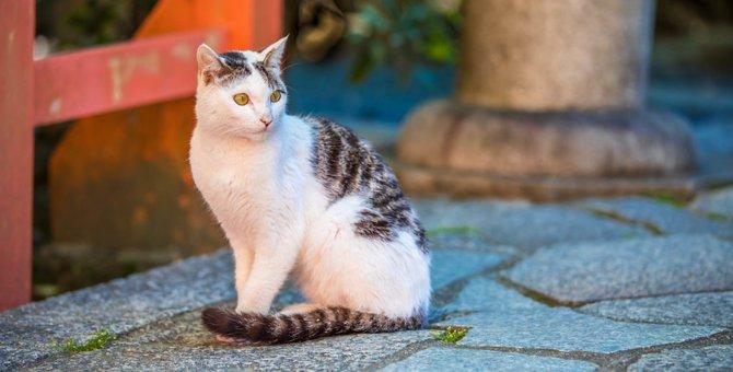 伏見稲荷の猫~京都のふれあいスポット~