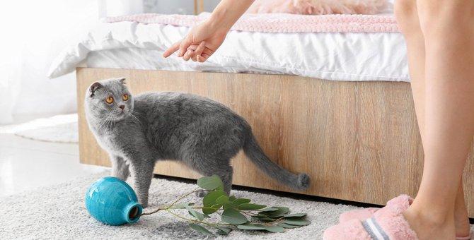 猫が『部屋を荒らす』ときの理由5つと対策
