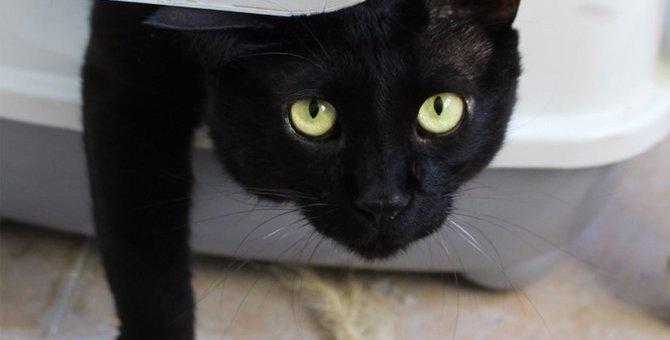 猫のコーナートイレのおすすめ人気ランキング10選、選び方や置く場所