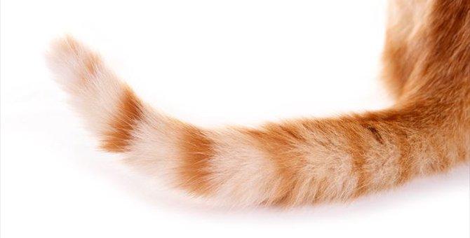 しっぽの状態で分かる猫の気持ち