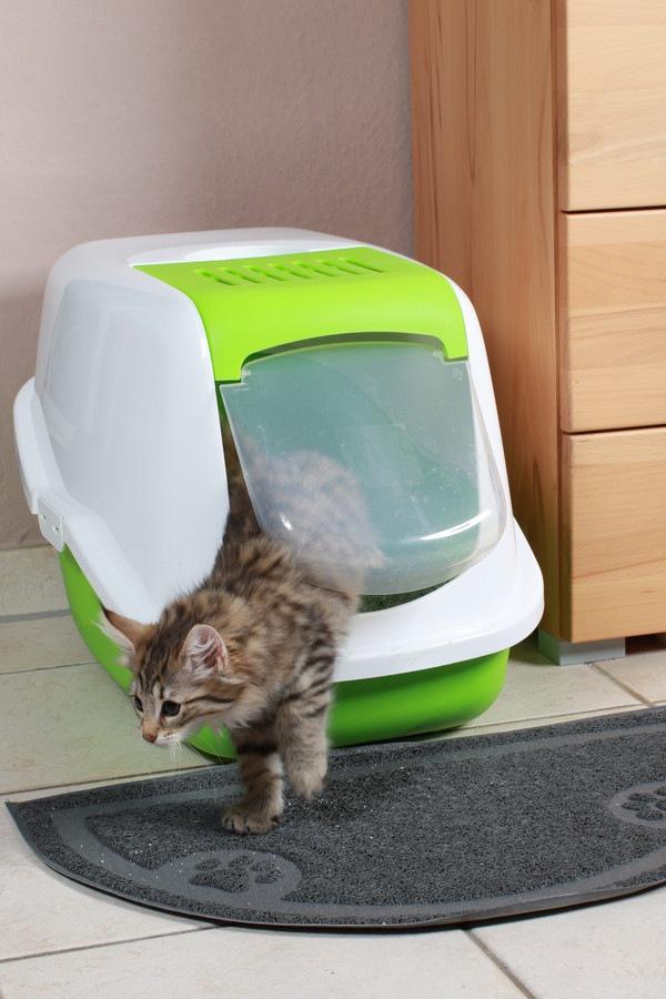 猫用トイレマットの正しい選び方とオススメ商品6選!
