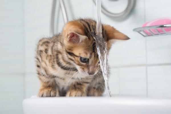 猫飼いあるある!まぬけな猫のおもしろ珍行動10連発
