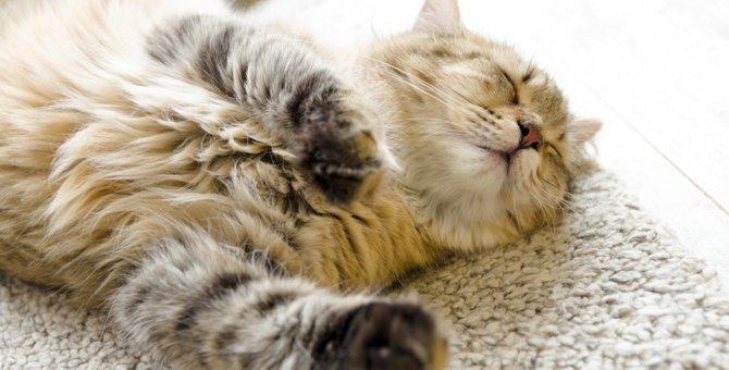 猫がいびきをかく時考えられる病気とその症状