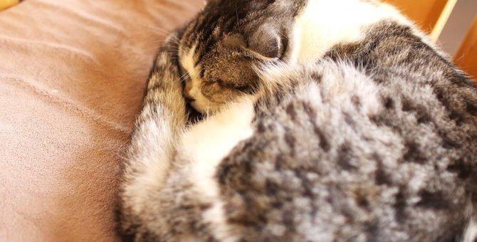 猫が腹痛の時にする10のサイン