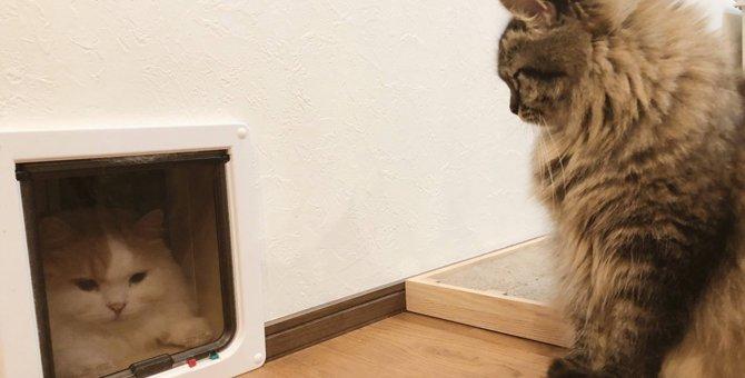 【話題】ココはこう!ペットドアを通れない兄猫を煽る弟猫に爆笑♡