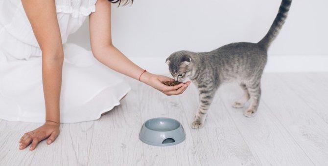 猫の薬はエサに混ぜても大丈夫?与え方や対処法