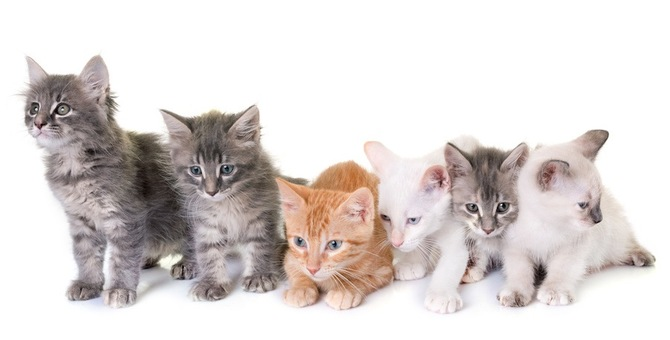 猫の体型・ボディタイプの6つの分類と特徴