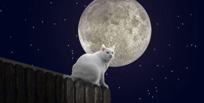 夢に猫が出てきたことが示す10の意味