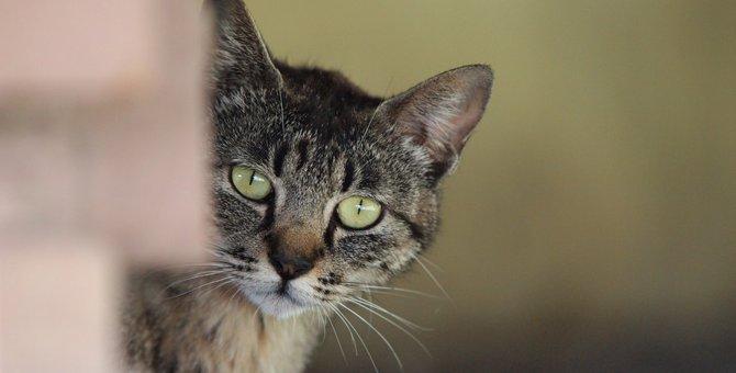猫の警戒心を解いてなついてもらう5つの方法