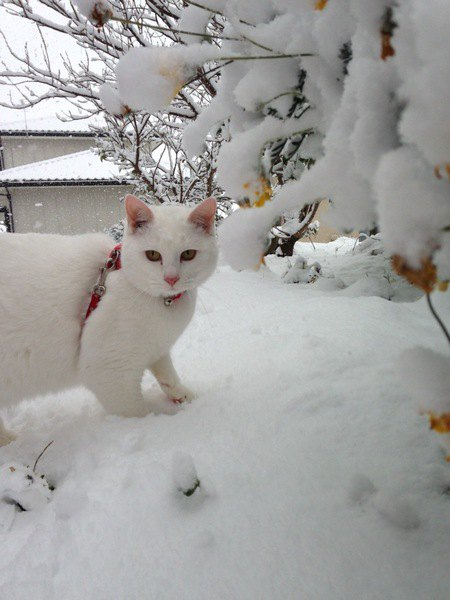 猫が好きな冷たいもの4選