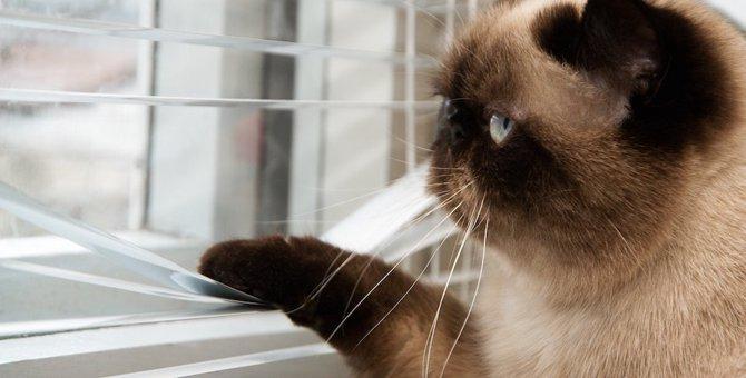 猫にお留守番はかわいそう?寂しがる時できる6つの対策
