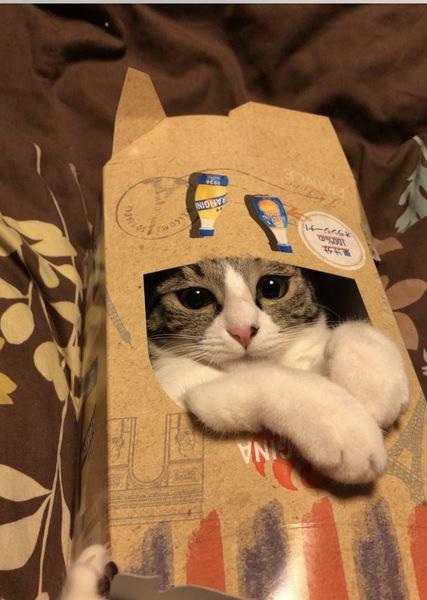 【小さすぎ!】猫がピタピタな箱を好む理由3つ
