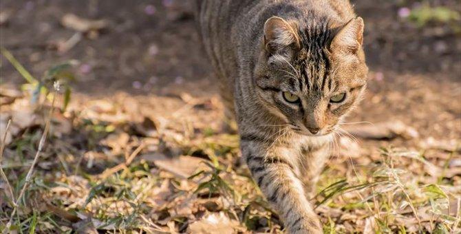 猫よけ対策の方法教えます!猫が嫌がることとは?