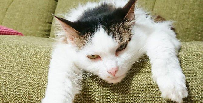 人間と猫は通じ合える…元動物看護師が綴る猫との暮らし