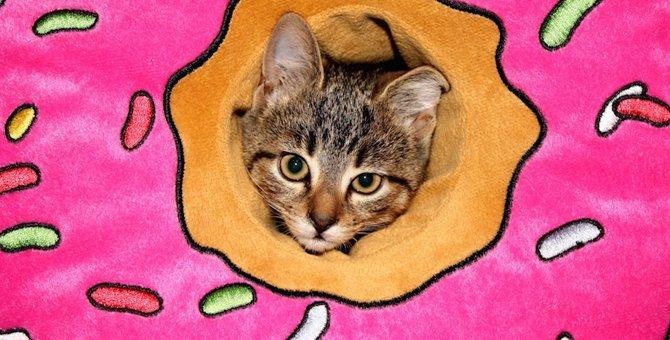 猫のエリザベスカラーにはドーナツ型がおすすめ!利点やおすすめ商品