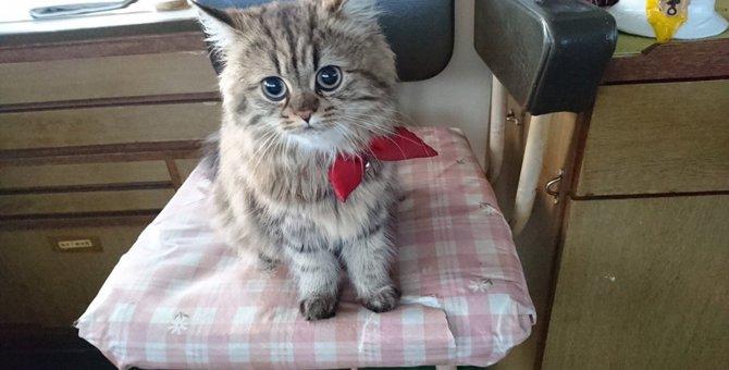 カンパチ猫船長とは 乗組員を癒す船上のアイドル