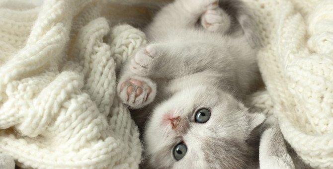 猫が丸くなって寝るのはなぜ?5つの理由