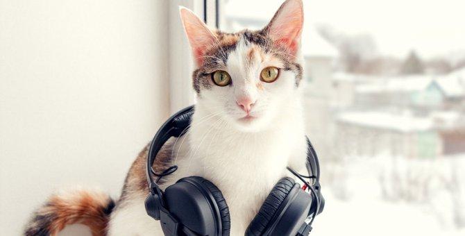 猫が『不快に感じる音』5選
